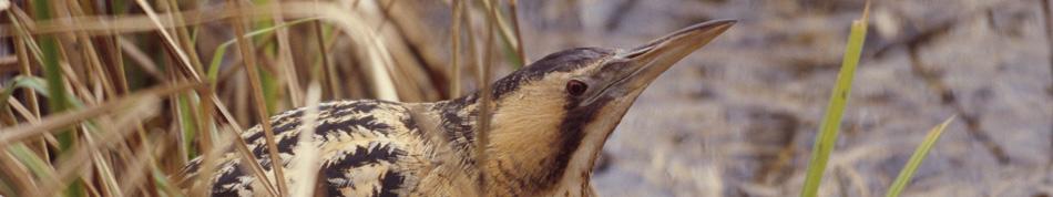 morecambe bay wildlife network